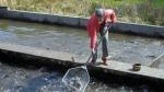bienvenue-la-pisciculture-du-val-de-see.jpg